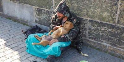 sanidad gratuita perros mendigos Milán