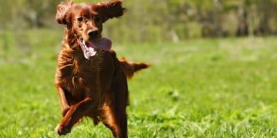 perros que reducen el riesgo de muerte en humanos
