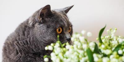 Katze und Maiglöckchen