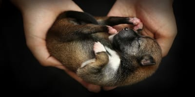 ¿Qué cuidados necesita un perro recién nacido?