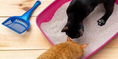 Drei einfache Schritte zum sauberen Katzenklo
