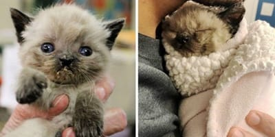 Pug, the special kitten born with congenital deformities
