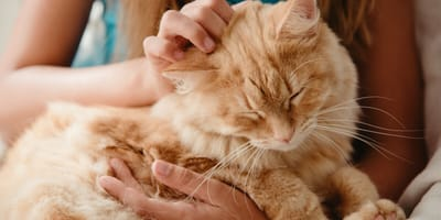Our advice for taking care of an elderly cat
