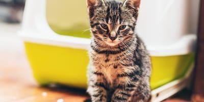 Mi gato no usa el arenero: estas son las razones