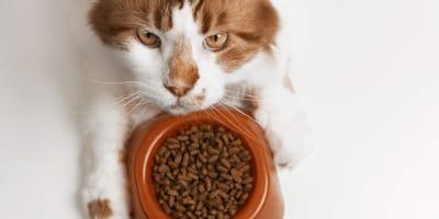 The diet for an elderly cat