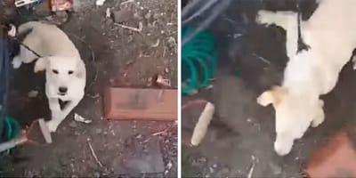 Graba a un perro llorando bajo la lluvia: la reacción del dueño es repugnante