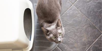 Wie sinnvoll ist ein selbstreinigendes Katzenklo?