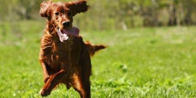 Hunde machen gesund