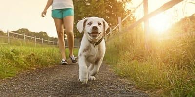 Perro paseando al sol