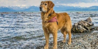 Urlaub mit Hund am Bodensee