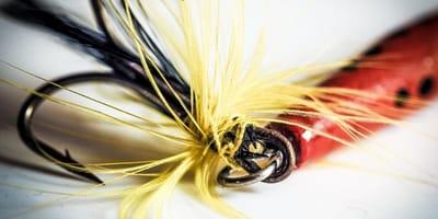 Fishhook closeup