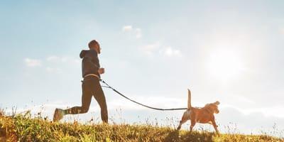 Laufen, Schwimmen, Jagen: Diese Hunde sind echte Sportskanonen