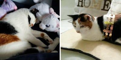 Dreifarbige Katze