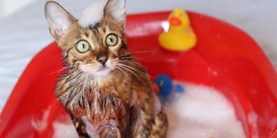 Kot pod prysznicem