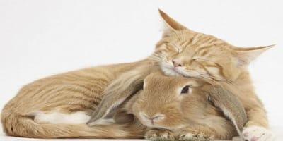 qué significa dar gato por liebre
