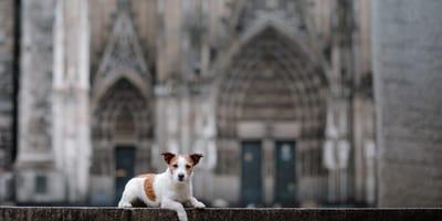 Hund vor Kölner Dom