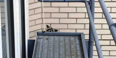 In Raucherpause: Sie denken da wäre ein Kätzchen, doch sie liegen voll daneben!