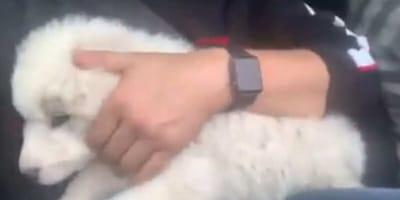 Szczeniak zostaje porzucony na autostradzie. Zobaczcie jak reaguje na zatrzymujące się auto (VIDEO)