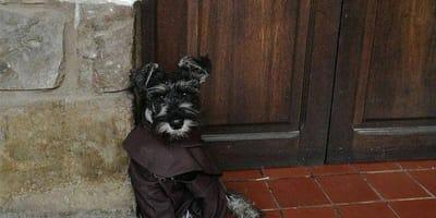 W Boliwii konsekrowano pierwszego psiego mnicha!