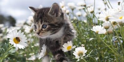 Richtig handeln, wenn die Katze von einer Biene gestochen wird