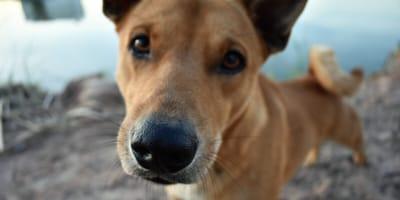dia perro sin raza