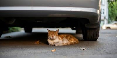 gato debajo del coche