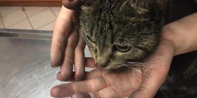 Kotka, która przeżyła pożar