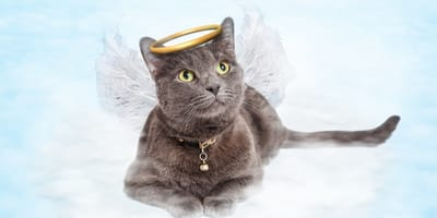 Trauersprüche, wenn die Katze gestorben ist