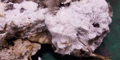 pelo-del-gatto-con-schiuma-bianca