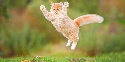 Katze springt hoch