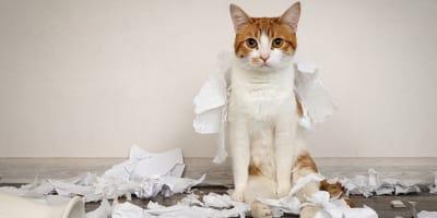 Gato solo en casa: 4 consejos para evitar el desastre de un fin de semana en soledad