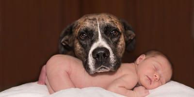 Hond rust met kop op baby
