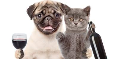 Hund und Katze mit Wein