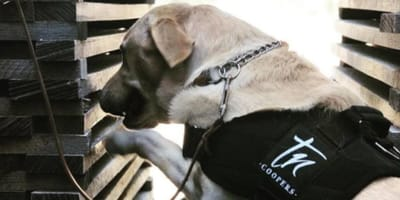 Here's how two dogs are helping produce the world's best wines