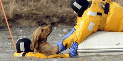 bomberos salvando animales