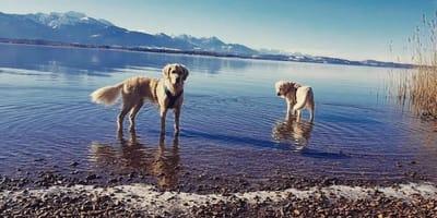 Urlaub mit Hund am Chiemsee