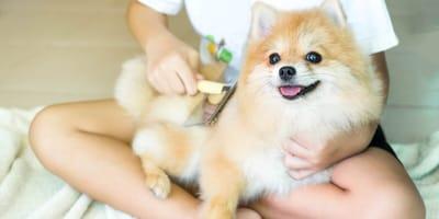 Czesanie psa - wszystko, co powinieneś o nim wiedzieć