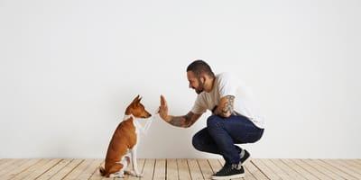 Comportamiento canino para 'dummies': descubre qué intenta decirte tu perro