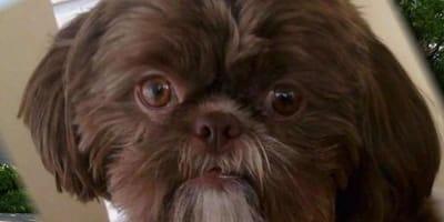 Die ganze Welt ist entsetzt, was eine Hundehalterin jetzt in ihrem Testament verlangt