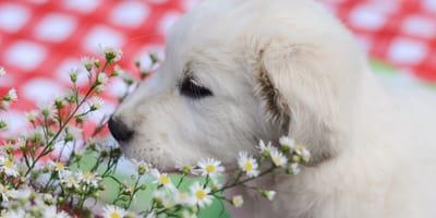 Cómo funciona el perfume para perros