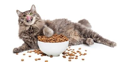 Sobrealimentación en gatos: peligros y consejos para revertirla