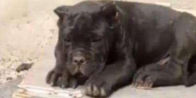 hombre detenido nombre raros perros