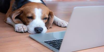 Motivos para censar a tu perro