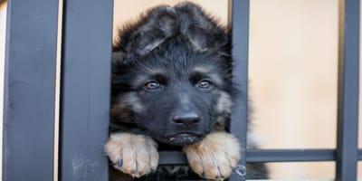 Cómo saber cuál es la residencia canina adecuada para tu perro