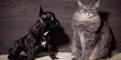 mały pies i duży kot