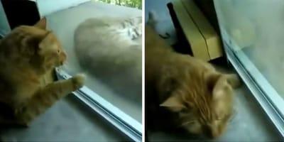 Ruega a su humano que deje entrar a un gato callejero, enseguida descubre que no es para nada un gato