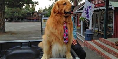 Poznajcie Maxa - burmistrza Idyllwild w stanie Kalifornia!