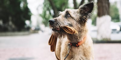 ¿Qué hacer si encuentras un perro perdido?