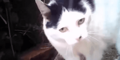 Cats on camera because science.