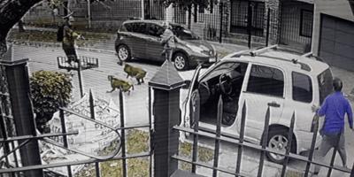 Víctima de un robo queda petrificada cuando ve lo que los asaltantes quieren hacer a sus perros (Vídeo)